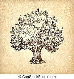 oliva, vettore, albero, illustrazione
