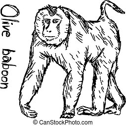 olive baboon walking - vector illustration sketch hand drawn with black lines, isolated on white background