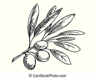 Olive branch illustration. Black and white version