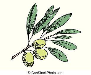 Olive branch illustration. Colored version