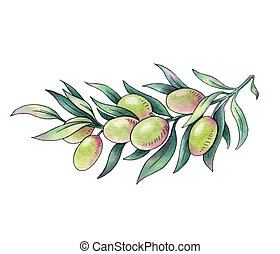 Olive branch. Watercolor illustration