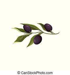 Olive branch with black olives vector Illustration