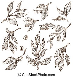 Olive branches and cocoa beans isolated sketches food vegetable
