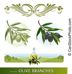 olive, branches, ensemble, vecteur, -