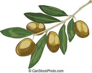 Olive colored sketch. Hand drawn olive branch. VECTOR illustration.