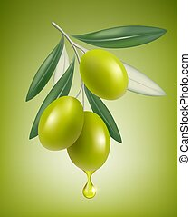 Olive drop. Natural branch with splashes of transparent oil vector closeup drop vector realistic greek olive food