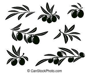 olive, ensemble, branche
