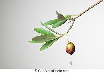 olive, goutte, huile