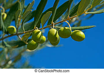 olive, grün