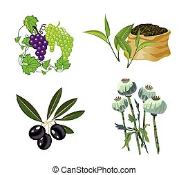 Olive, Grape, Tea, Opium Poppy