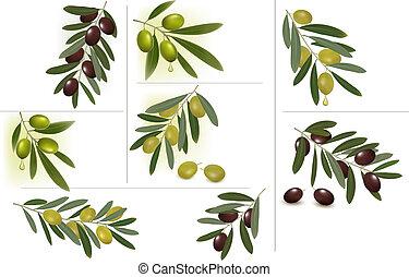 olive, groene, set, achtergronden