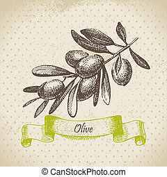 Olive. Hand drawn illustration