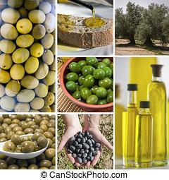 Olive harvest collage made of seven images. Freshly...