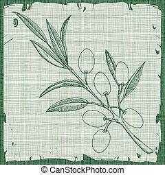 Olive illustration