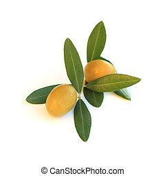 Olive isolated on white background