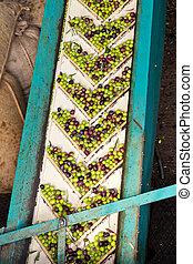 Olive Mill Conveyor Belt Feed - Conveyor belt constantly...