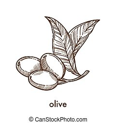 Olive on small stem with leaves monochrome sketch