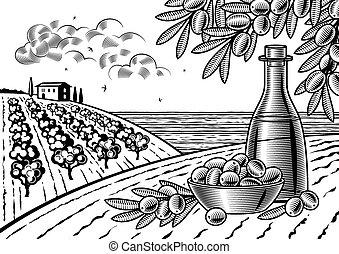 olive, oogsten, landscape