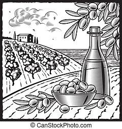 olive, oogsten, witte , black