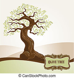 olive, oude boom