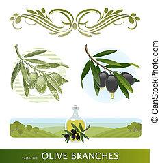 olive, takken, set, vector, -