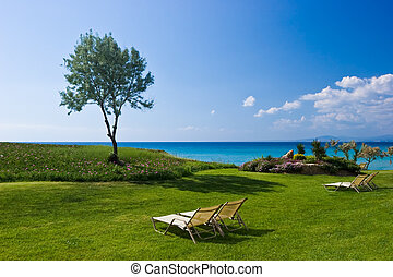 Olive tree and lounge chairs on the beach
