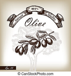Olive tree branch hand drawn illustration in sketch style