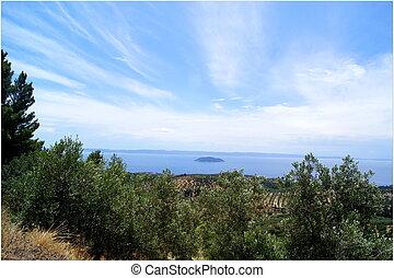 Olive Tree Field View