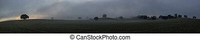 Olive tree, fog, haze, panorama