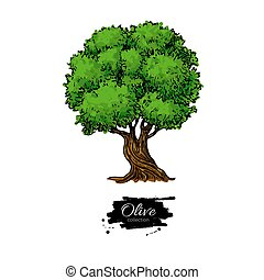 Olive tree. Hand drawn vector illustration. Vintage botanical drawing.