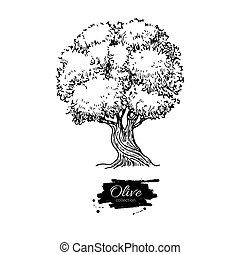 Olive tree. Hand drawn vector illustration. Vintage botanical drawing. Old style engraved isolated object.