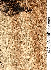 Olive tree Olea europaea bark with leaves shadow