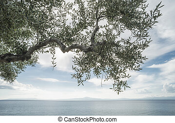 Olive tree on the beach