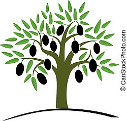 Olive tree with green leaves. Tree with black olives. Vector...