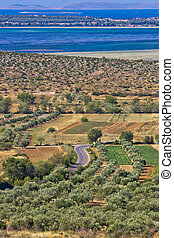 Olive trees grove field, Vrana lake and Kornati national park