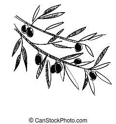 olive, vecteur, illustration, branche