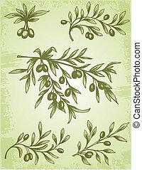 olive, vendange, branche
