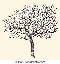 olive, vendange, gravé, fond, illustration