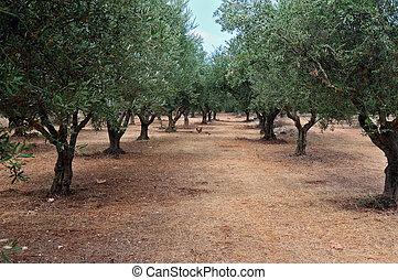 oliveira, filas