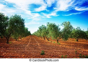 oliveira, filas, frança
