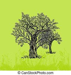 Oliven-Baum.eps