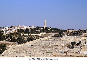 oliven, bestige, ind, jerusalem