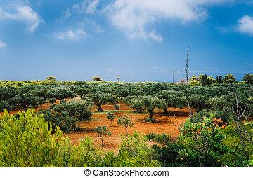 oliven, gartenerde, griechenland, landschaftsbild, felder, inseln, tonerde, landwirtschaft, rotes