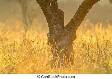 oliven træ, hals, glød