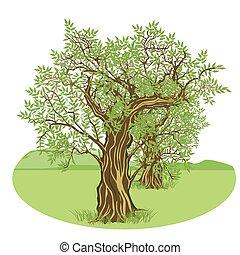 Olivenbaum Land.eps