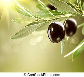 olives., érett, fa, felnövés, black olajbogyó
