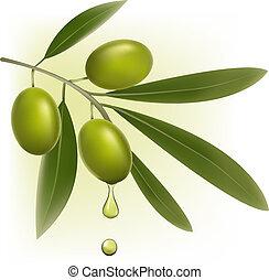 olives., וקטור, רקע ירוק, טרי, illustration.