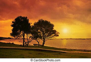 Olives at sunset