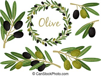 Olives branches and olive crown. Greek olives branch and wreath set, vector summer oil food tree twigs and leaves