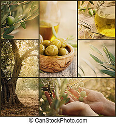 Olives collage - Nature series. Collage of olive orchard in...